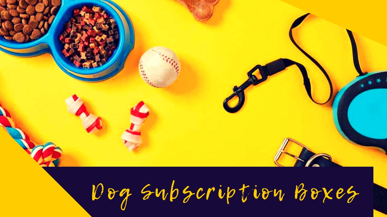 Dog Subscription Boxes