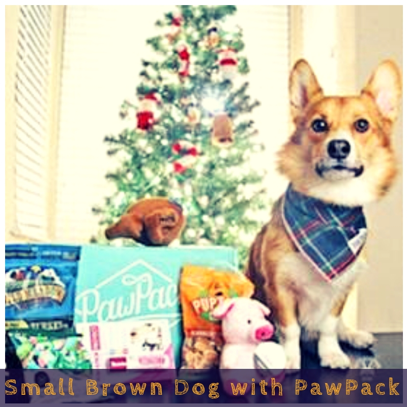 Small Brown Dog with PawPack