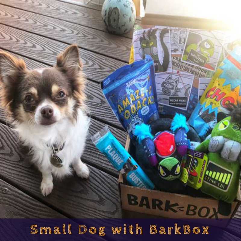 Small Dog with BarkBox