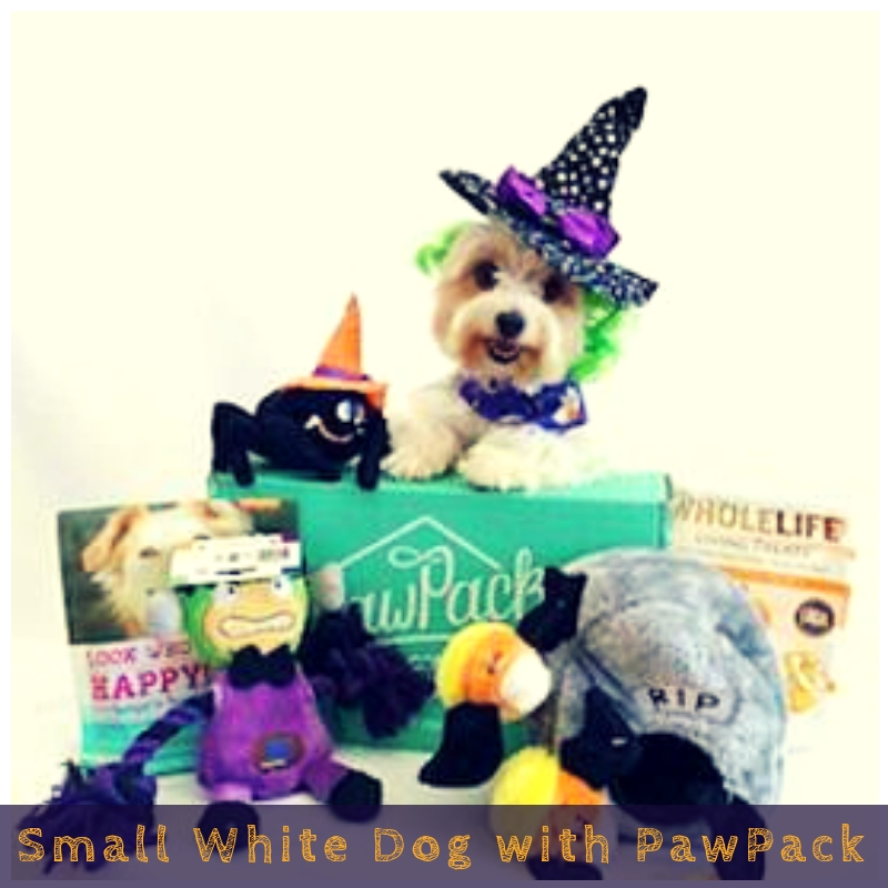 Small White Dog with PawPack