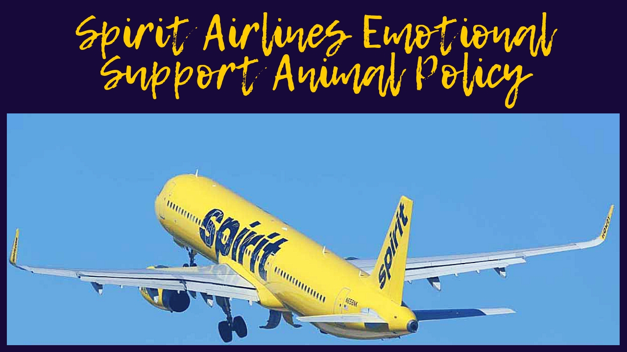 Spirit Airlines Emotional Support Animal Policy