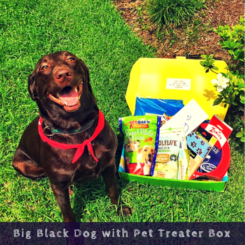Big Black Dog with Pet Treater Box
