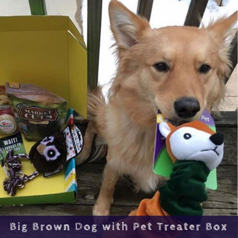 Big Brown Dog with Pet Treater Box
