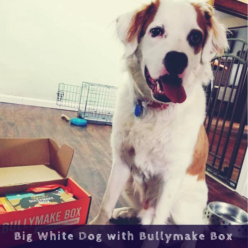 Big White Dog with Bullymake Box