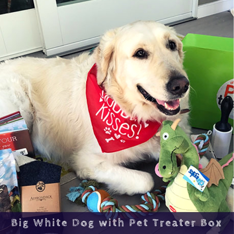 Big White Dog with Pet Treater Box