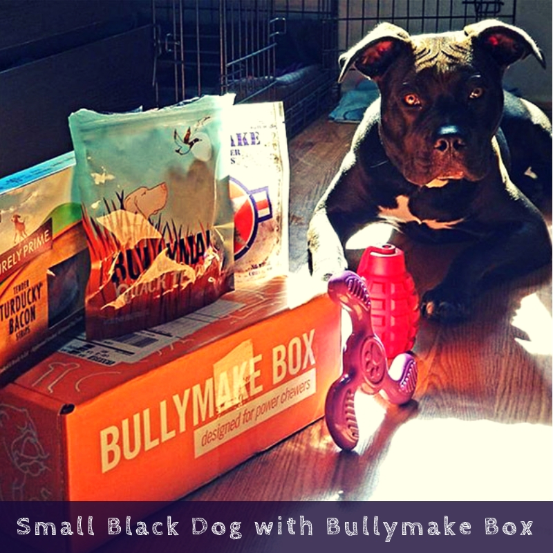 Small Black Dog with Bullymake Box
