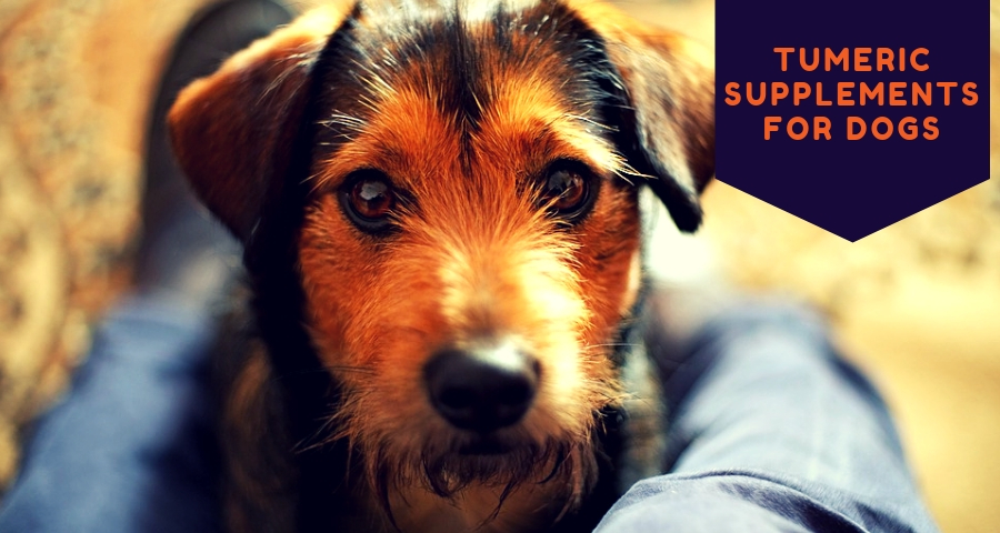 Tumeric Supplements For Dogs