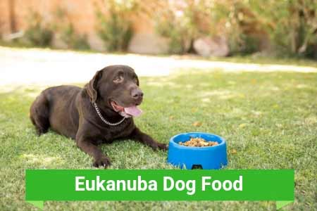 Should You Purchase Eukanuba Brand Canine Food For Your Pup?