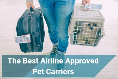 Top Rated List of Pet Carriers Approved By Airlines