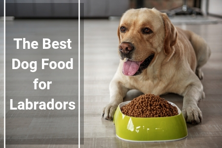 Top Rated Dog Food For Young Labs