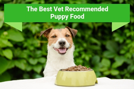 The Best Vet Recommended Puppy Food