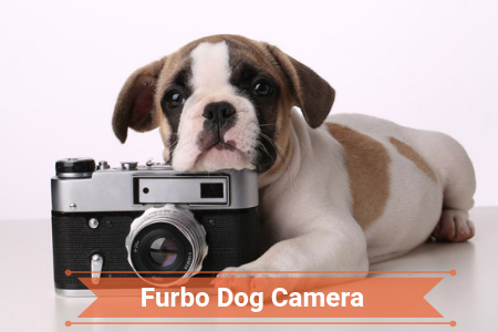 2019 Review of Furbo Dog Camera