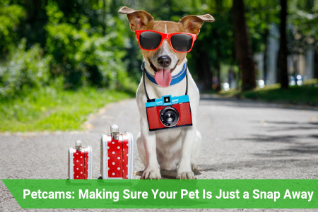 Pet Cameras That Will Provide Peace of Mind in the Paws of Your Hands