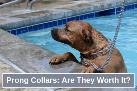 Safety & Buyers Guide to Prong Collars For Dogs