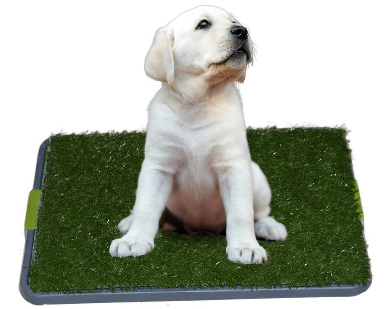Sonnyridge Easy Dog Potty Training Made with Synthetic Grass
