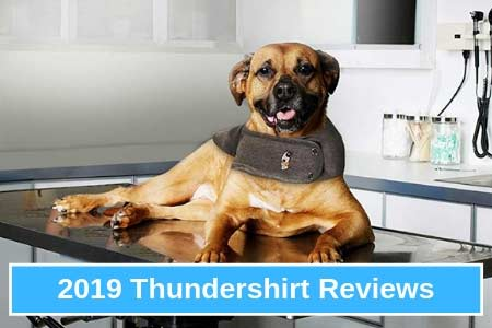 Thinking About Purchasing A Thundershirt? Read This First.