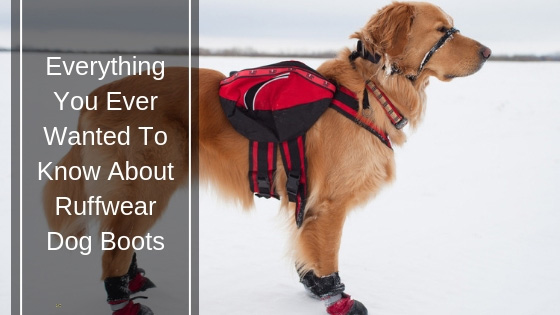 A Complete Guide to Ruffwear Dog Boots