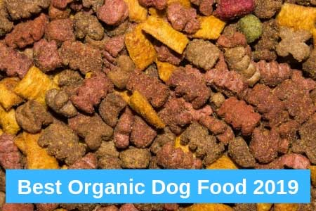 Canines Can Eat Organic, Too?!