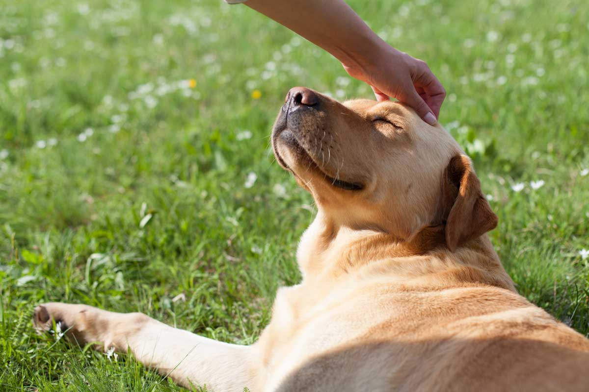 Colloidal Silver for Dogs: Is This Safe or Harmful? | Therapy Pet