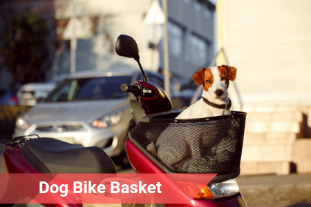 Bike Baskets That Every Canine Will Love