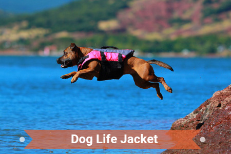 Which Life Jack Is Best For Your Canine?