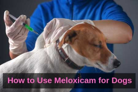 How to Use Meloxicam for Dogs