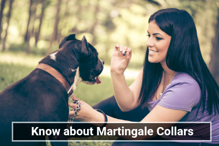 Everything You Need to Know about Martingale Collars and More