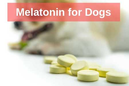 Is Melatonin Safe For My Dog?