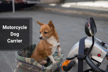 Specialized Dog Carriers For Your Motorcycle!