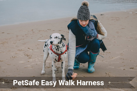 The Ultimate PetSafe Easy Walk Harness Review