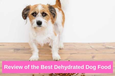 Dehydrated Dog Food Any Canine Will Love