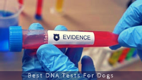Best DNA Tests For Dogs
