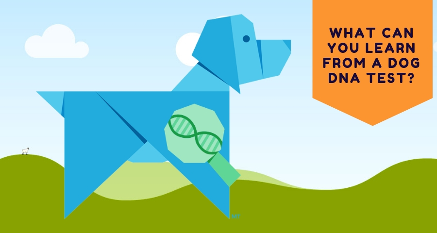 Learn From a Dog DNA Test