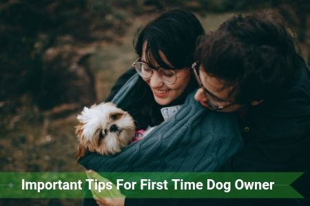 5 Important Tips that Every First Time Dog Owner Should Know