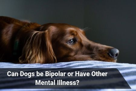 Can Dogs be Bipolar or Have Other Mental Illness