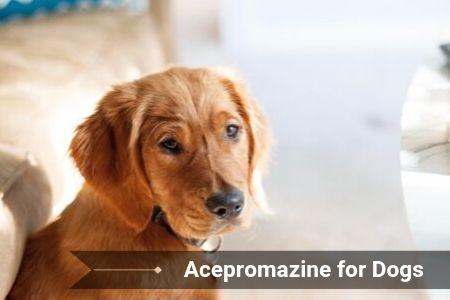 Acepromazine for Dogs