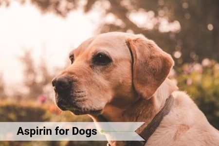 Aspirin for Dogs: Safe For Your Pup?