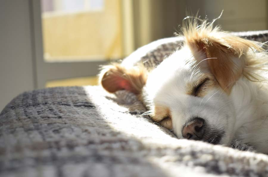 Diagnosis of Ear Mites in Dogs