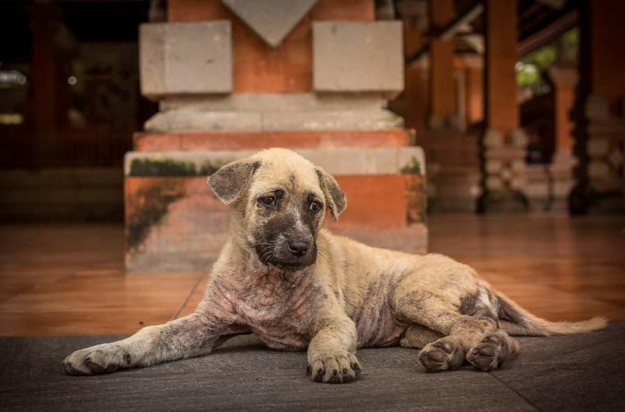 Interceptor Side Effects in Dogs