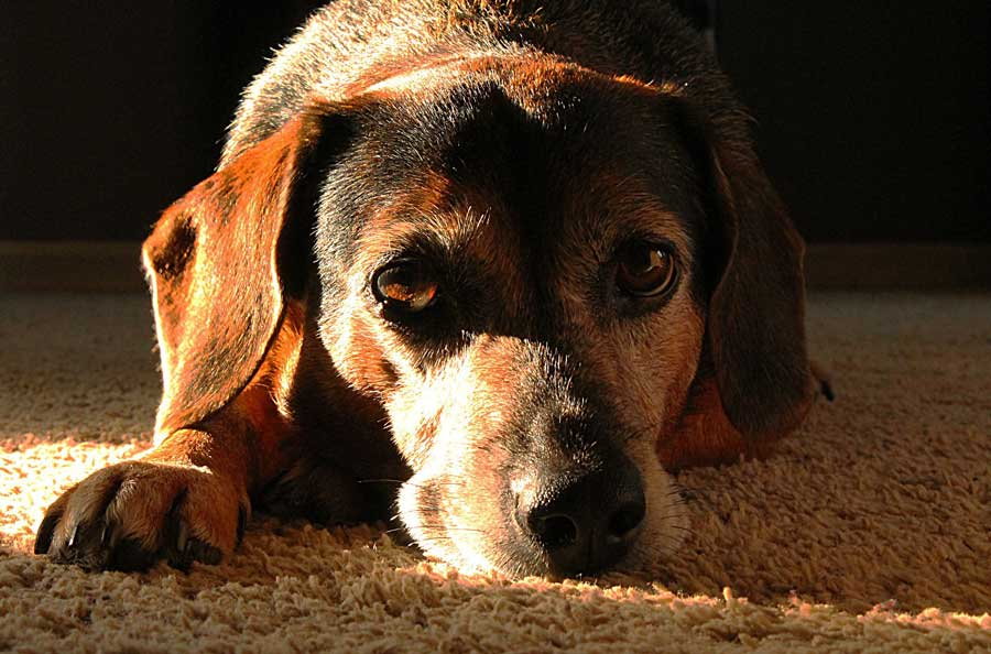 Is Famotidine Too Risky for Some Dogs