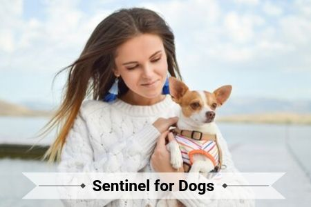 Sentinel for Dogs