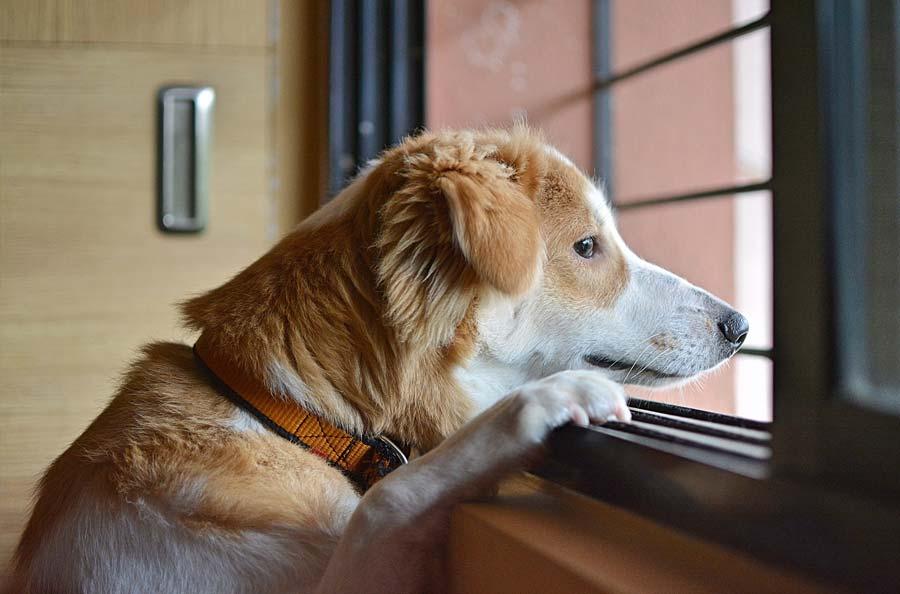 Side Effects of Famotidine in Dogs
