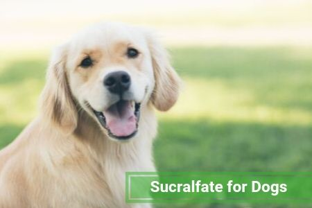 Sucralfate for Dogs