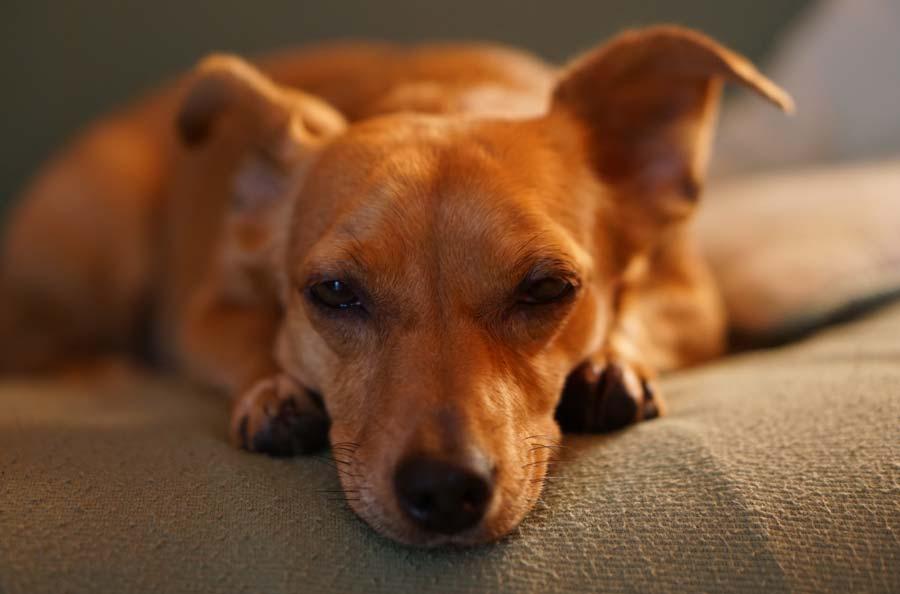 Travel to your dog's intestine