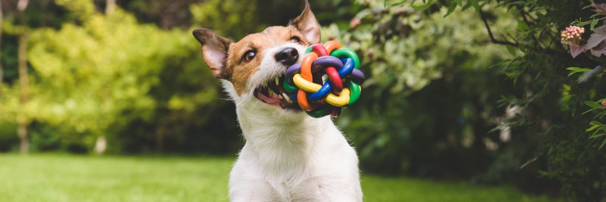 Why Do Dogs Shake Their Toys
