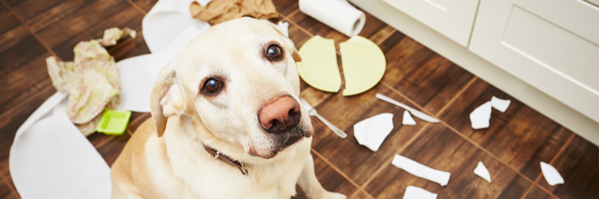 Dogs Behavior Problems and Solutions: 6 of the Most Common