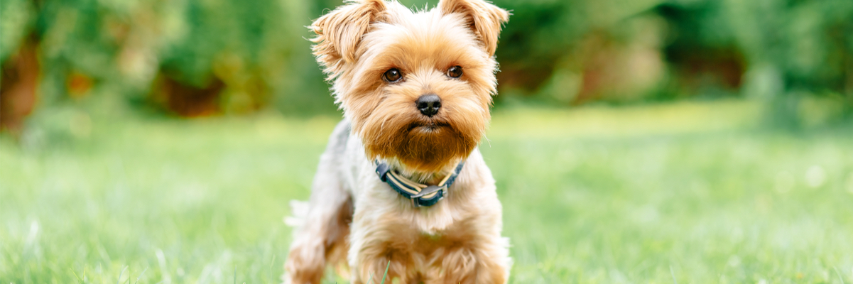 10 Best Harnesses for Small Dogs You Should Buy