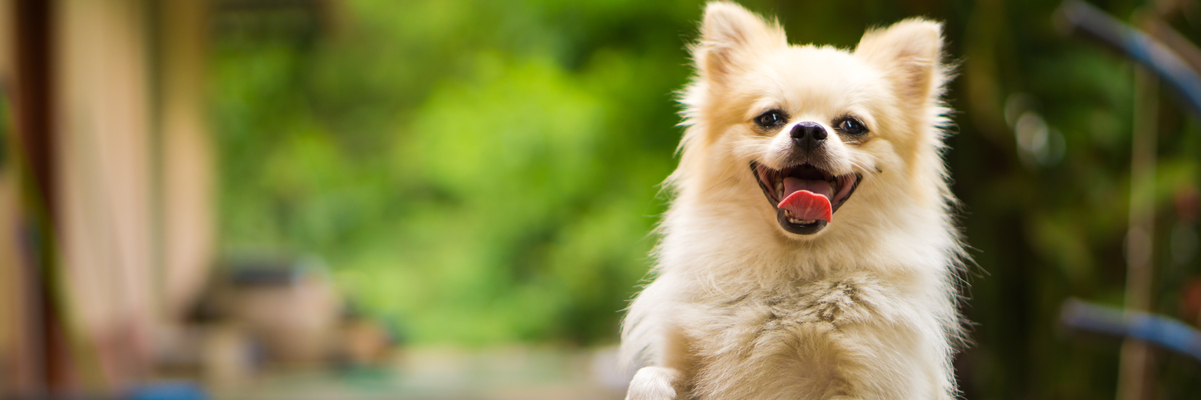 Dog Breed DNA Tests Which Tests Are Best