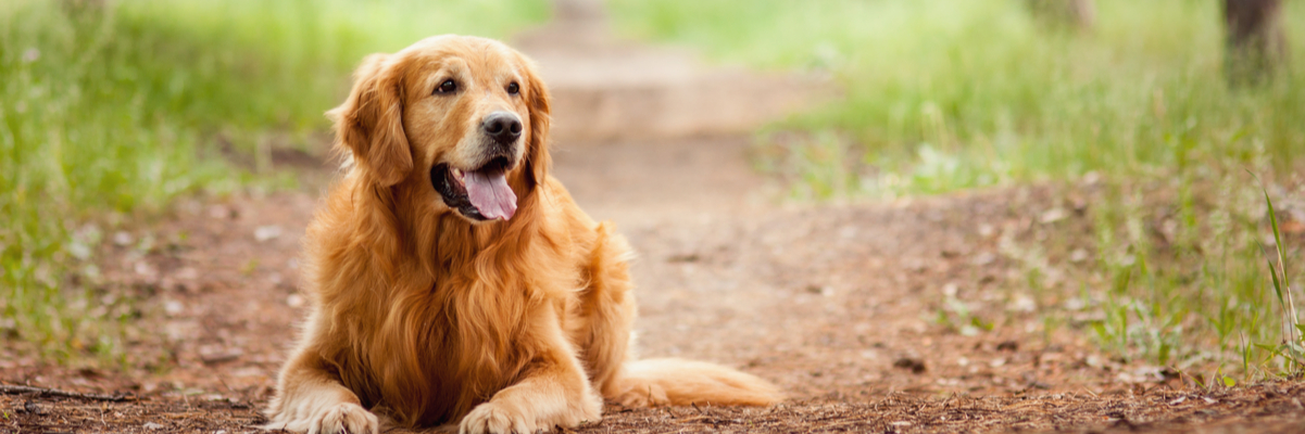 Top 10 Healthy Dog Food Brands